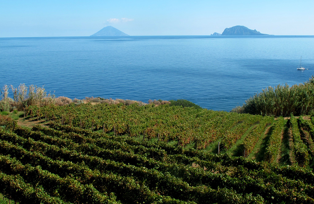 The Divine Wine tours in Sicily